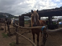 aojamiento caballos