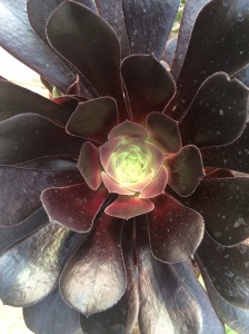 Cactus en vivero Abierto