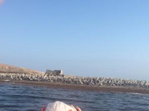 Se observan miles de aves desde el mar en la superficie de la Isla