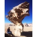 Arbol en el desierto de piedras