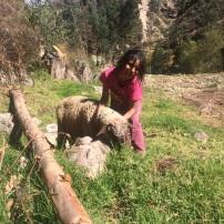 MIriam y sus ovejas