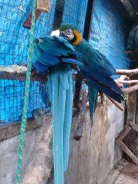 Aves en sus zonas